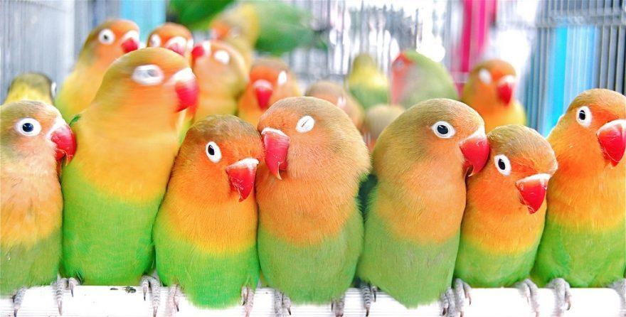 3 Best Pet Parrots For Beginners Aviculture Hub