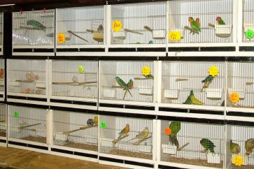 What to expect from your first bird sale
